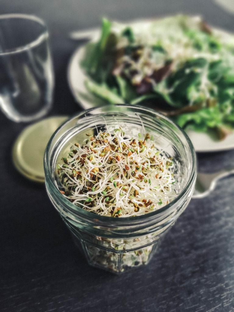 Graines germées et salade