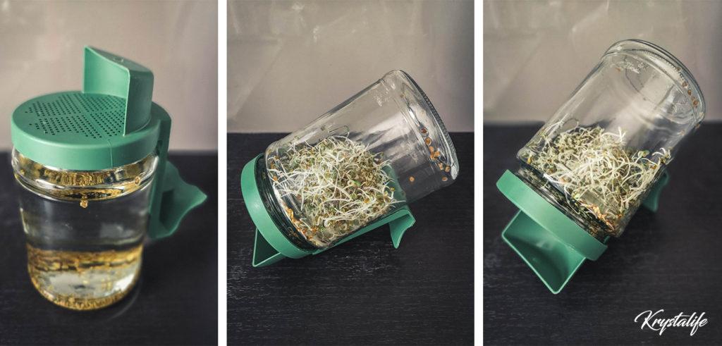 Utilisation d'un germoir pour graines germées